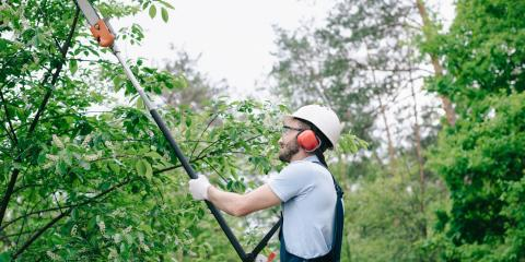 3 Practical Reasons to Prune Your Trees, Lincoln, Nebraska