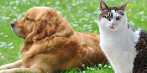 3 Springtime Pet Care Tips, Lincoln, Nebraska