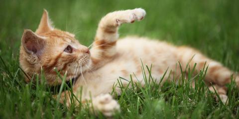 The Do's & Don'ts of Keeping Outdoor Cats Healthy, Lincoln, Nebraska