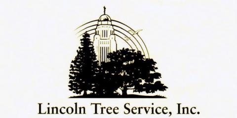 "Why We ""Clean"" Trees, Lincoln, Nebraska"