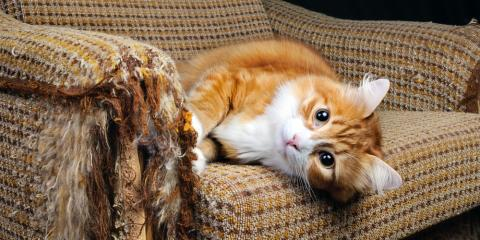 5 Easy Ways to Protect Furniture From Pets, Sycamore, Ohio
