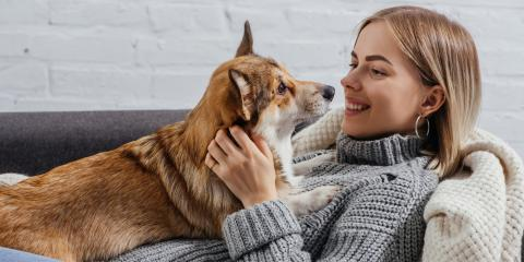 3 Ways a Pet Can Affect Your HVAC Unit, Thomaston, Connecticut