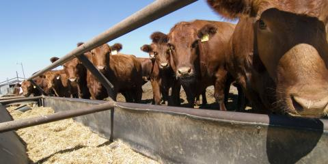 5 Tips to Help Protect Your Livestock Supplies, Bethel, Ohio