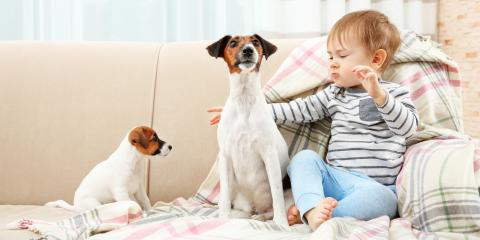 Furniture Store Offers Tips to Maintain Upholstery When You Have Dogs & Kids, Spanish Fort, Alabama