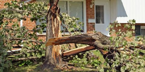3 Circumstances That Call for Emergency Tree Removal, Kalispell, Montana