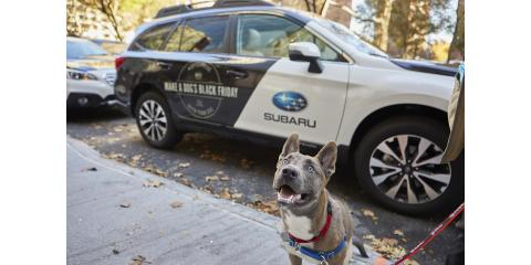 Our friends at Dan Perkins Subaru want to advocate for the local animal community...Why?  Because #subarulovespets, Stratford, Connecticut
