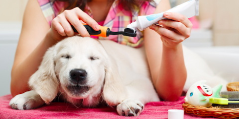 A Local Veterinarian Provide 3 Tips For Home Pet Dental Care, Wisconsin Rapids, Wisconsin