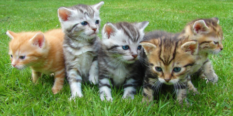 5 Reasons Why Spaying or Neutering Your Pet Is Important, Wisconsin Rapids, Wisconsin