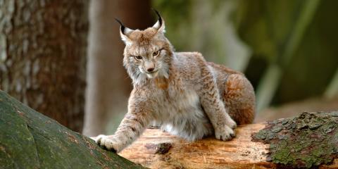 7 Striking Animals You'll Encounter Lodging Near Denali National Park, Healy, Alaska