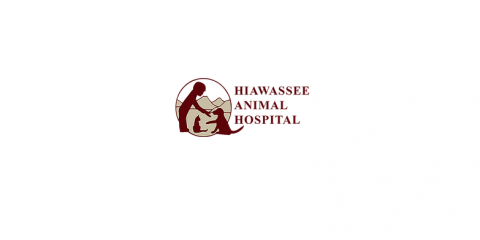 Hiawassee Animal Hospital, Veterinarians, Health and Beauty, Hiawassee, Georgia