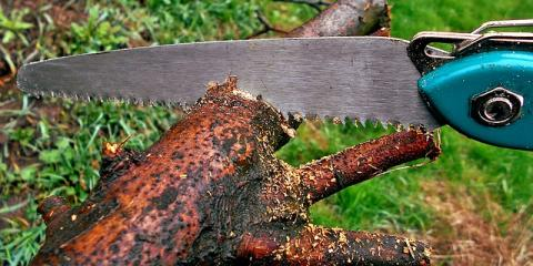 Tree Trimming Safety: When to Call in the Lawn Specialists, Islip, New York