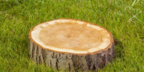 3 Reasons to Remove Tree Stumps Immediately, Milton, Pennsylvania