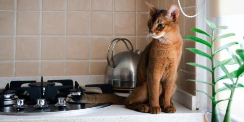 How to Prevent Your Pet From Starting a Fire, Sharonville, Ohio