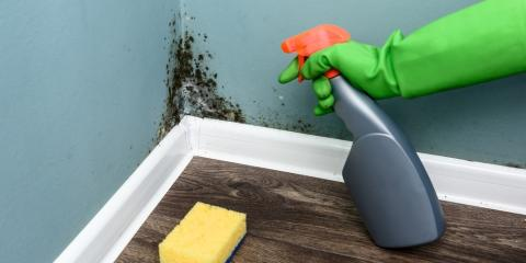 5 Steps to Take to Recover from Mold Damage, Louisville Airport, Kentucky
