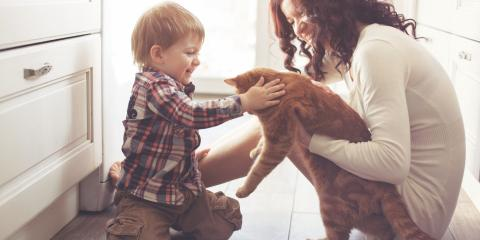 4 Pet Care Tips to Follow if You Have an Elderly Cat, Miami, Ohio