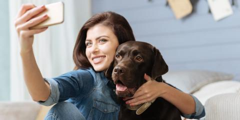 Can a New Pet Affect Your HVAC System?, Miami, Ohio