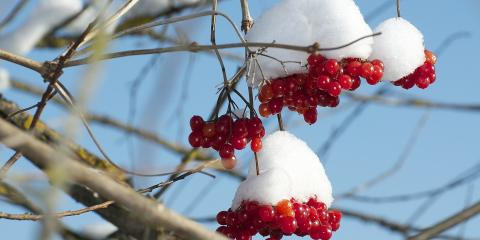 5 Ways to Prepare Your Trees for Cold Weather, Loveland, Ohio