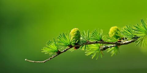 Tree Care 101: How to Tell if a Tree Is Hazardous, Loveland, Ohio