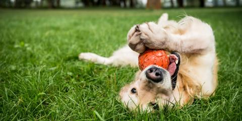 3 Benefits of Having a Yard & Park for Your Dog, Woodstock, Georgia