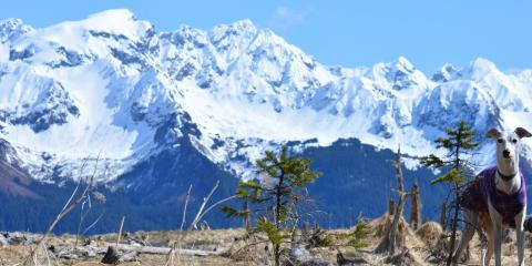 5 Essential Pet Supplies for Summer, Anchorage, Alaska