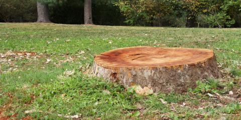 4 Reasons to Arrange Stump Grinding From a Professional Arborist, Sparta, Georgia