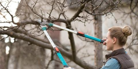 5 Essential Tree Maintenance Tips, Sparta, Georgia