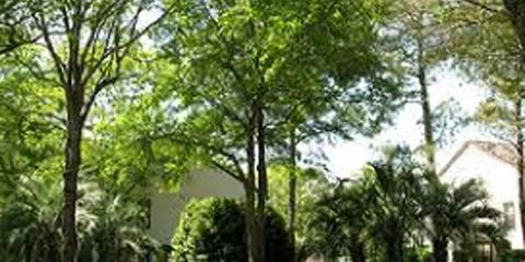 3 Easy Tips for Choosing a Tree Service Company, Sparta, Georgia