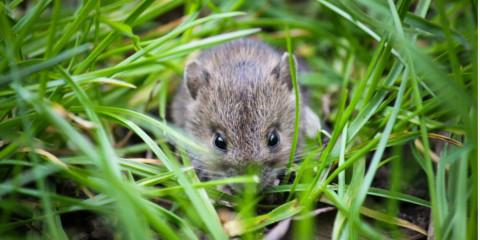 Rodent Control Experts Recommend 4 Steps for Thorough Cleanup, North Haven, Connecticut