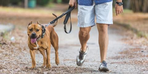 3 Indicators Your Pet Might Be Overheated, Gulf Shores, Alabama