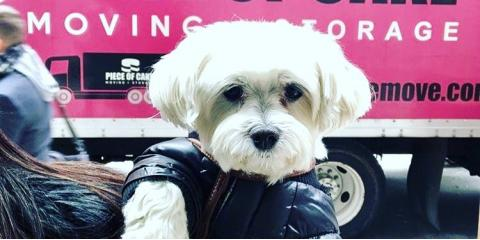 5 Tips to Pet-Proof Your New Home, Manhattan, New York