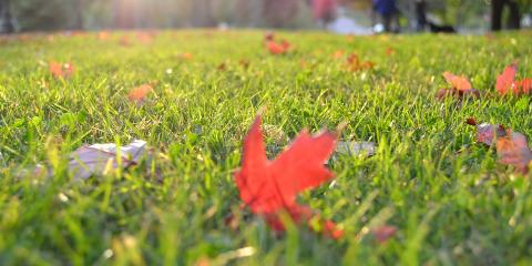 5 Fall Lawn Care Tips From Maineville's Landscaping Services Experts, Maineville, Ohio
