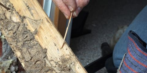 Signs You Need Termite Extermination, White Oak, Ohio