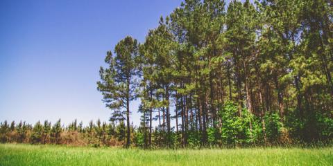 Camden Forest Management Team Explains 4 Silvicultural Practices, Camden, Arkansas