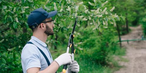 4 Tree Care Tips for Autumn, Mantua, Ohio