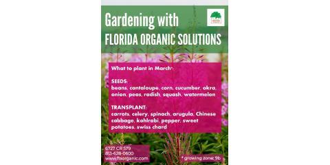 March Gardening, Brandon, Florida