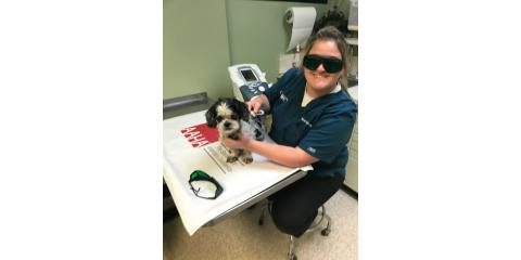 Should You Incorporate Cold Laser Therapy Into Your Dog Care Routine?, Cincinnati, Ohio