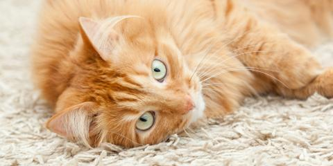 4 Best Types of Carpeting for Cats, ,