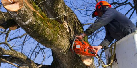 5 Pruning Tips From Marinette's Tree Care Experts, Marinette, Wisconsin