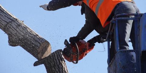 3 Reasons to Hire Professionals for Expert Tree Removal, Marinette, Wisconsin