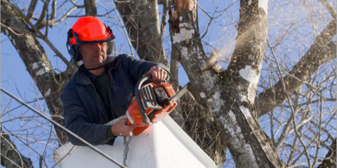 4 Tips on Finding a Reliable Tree Service Company, Marinette, Wisconsin