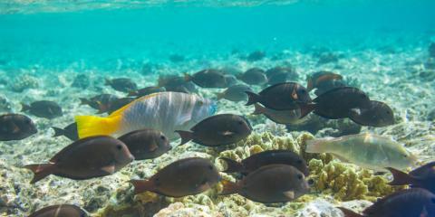 3 Hawaiian Fish That Are Delicious & Nutritious, Honolulu, Hawaii