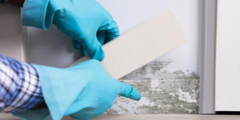 What's the Difference Between Mold & Mildew?, Shenandoah, West Virginia