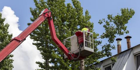 Top 3 Benefits of Tree Pruning, Berrett, Maryland