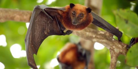 5 FAQ About Bat Guano, Miami, Ohio