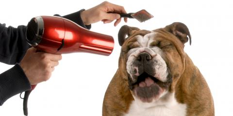 Expert Dog Groomer Explains Why It's Important to Groom Your Puppy, Oyster Bay, New York