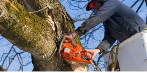 Mathias Precision Tree & Landscaping Inc. , Tree Service, Services, O'Fallon, Missouri