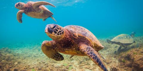 3 Tips for Swimming With Turtles, Lahaina, Hawaii