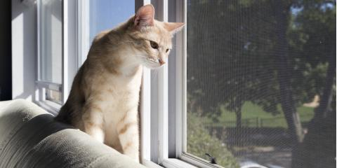 3 Tips for Keeping Cats From Playing With Window Treatments, Lahaina, Hawaii