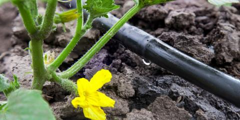 The Difference Between Drip Irrigation & Lawn Sprinkler Systems, Waterford, Connecticut