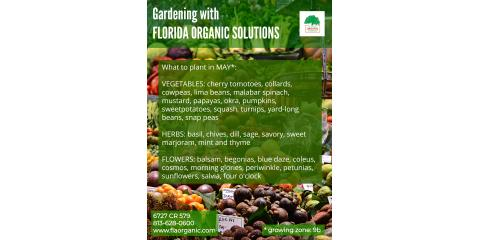 What to Plant in May, Brandon, Florida